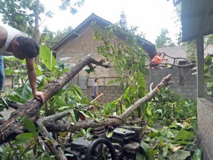 Hujan Dengan Intensitas Tinggi Sebabkan Pohon Jati Tumbang di Dusun Jejeran I RT 04